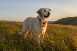 service-Elderly-Dog-Visits