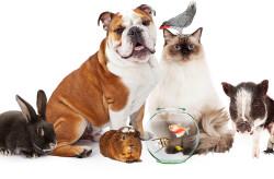 service-Pet-Sitting