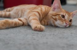 service-Petpals-Cat-Sitting