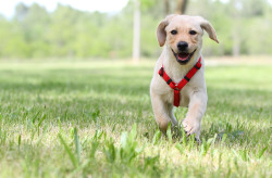 service-puppy-care
