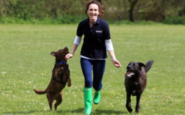 Daily Mail. Jo Davies, Petpals Salisbury, franchisee, with Monty Labrador/German Shepherd cross, right, and Peanut, Staffordshire cross, left. Petpals provide a professional pet sitting and dog walking service. Salisbury, Wiltshire. 3 May 2013