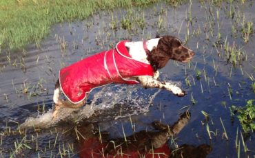 A Petpals client having a fabulous, if slightly wet, walk!