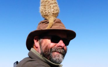 Les Wall provides a handy vantage post for this Botswanan Meercat