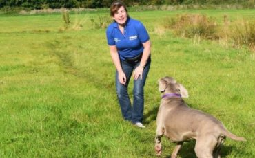 Alex Mees, owner of Petpals Basingstoke, takes a dog for a walk