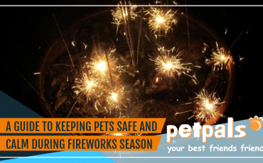 Keeping pets safe and calm during fireworks