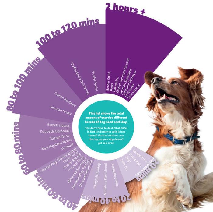 PDSA dog exercise chart