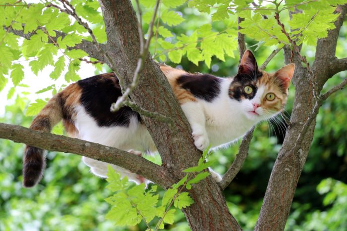 A curious cat up a tree