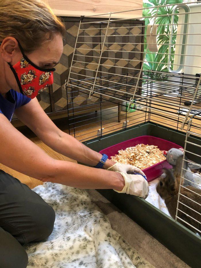 Rabbit feeding time
