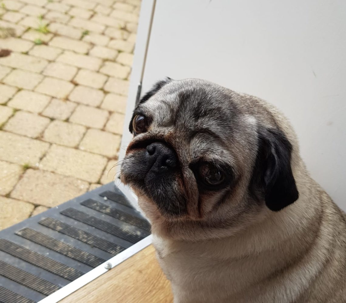 Dog looking sad by door